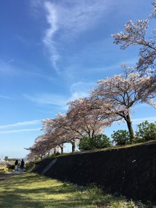 Myrteアロマテラピースクール 秦野 桜