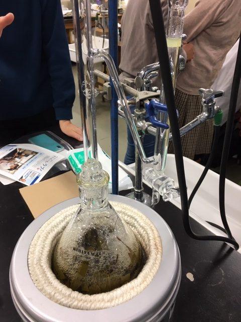 ユーカリ 熱水蒸留